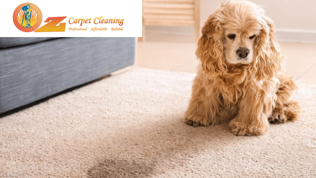 Step By Step Instructions To Get Poop Stains Out Of Your Carpet